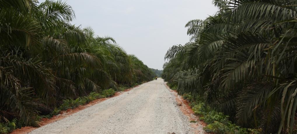 Perkebunan Kelapa Sawit masyarakat Desa Dosan